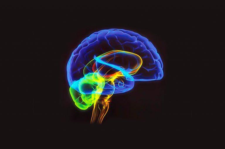 Financiamento público de cérebros: novos Ministros velho projeto